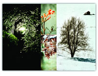 """Winter Collage"""